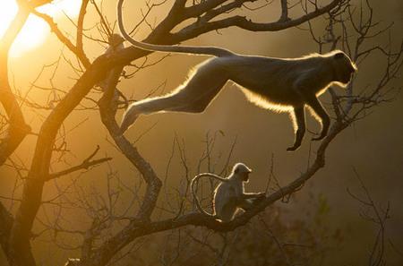 Steve Bloom – всемирно известный фотограф- анималист. Изображение № 3.