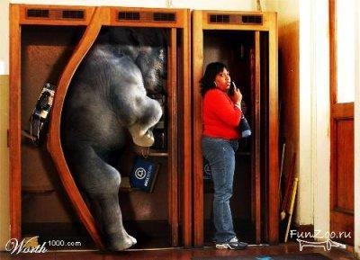 Какспрятать слона. Изображение № 26.