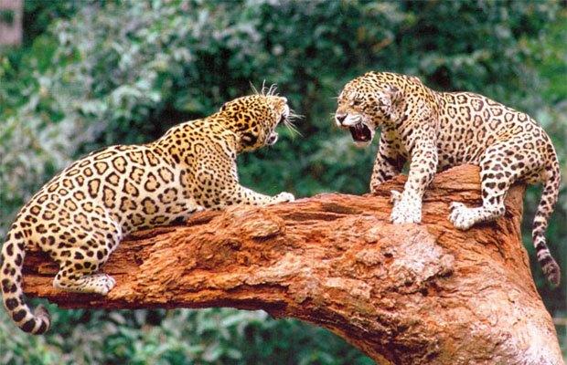 Тропические животные. Изображение №19.
