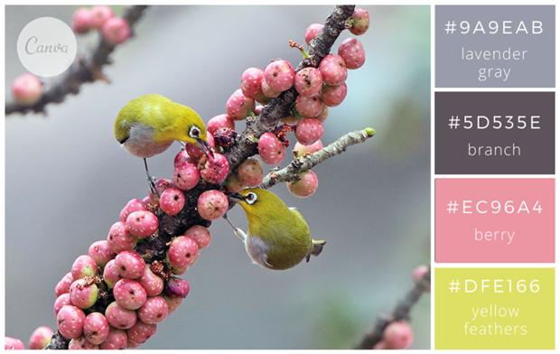 Сервис Canva предложил 100 удачных сочетаний цветов. Изображение № 15.