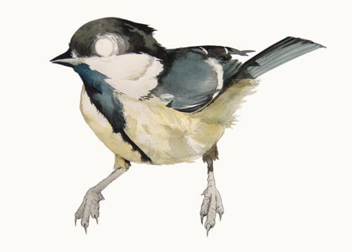Birds Of Claire. Изображение № 4.