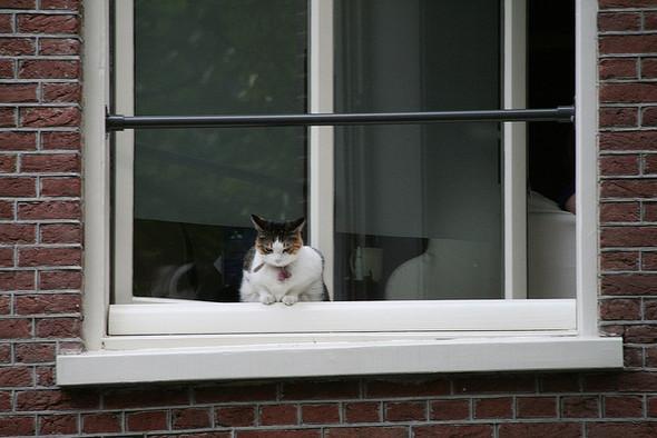 Cat. Window. Изображение № 47.