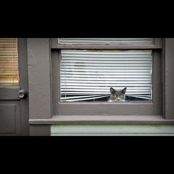 Cat. Window. Изображение № 50.