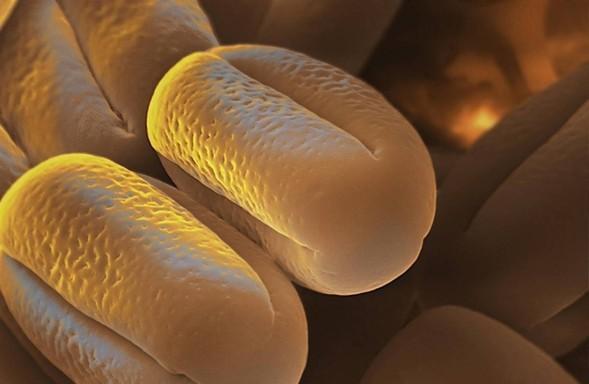 Микроскоп-2: Пыльца. Изображение № 11.