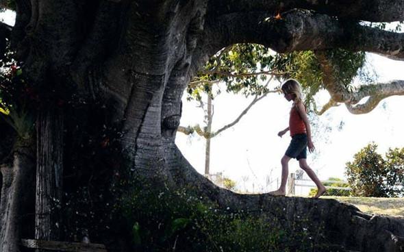 Премьера: «Дерево». Изображение № 1.