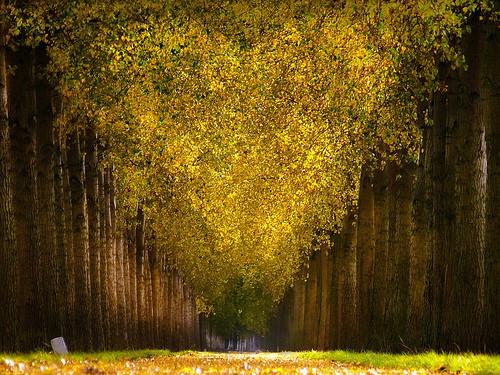 Фотография Ларса ван де Гоора. Изображение № 18.