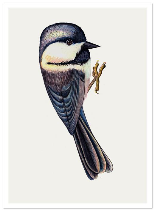 Birds Of Claire. Изображение № 28.