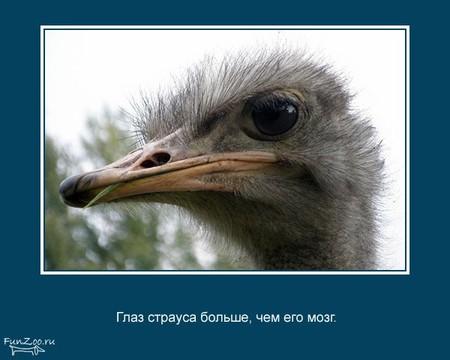 Животные иинтересные факты оних. Изображение № 24.