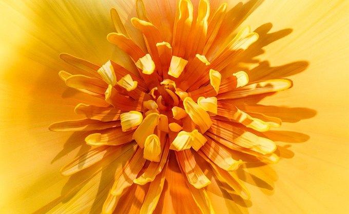 Для Apple Watch оформили цветами витрину Selfridges . Изображение № 2.