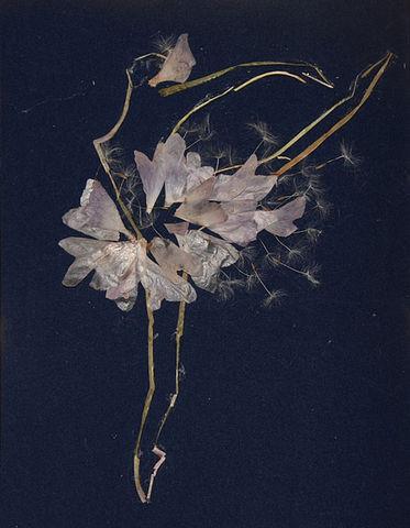 Вера и цветы. Изображение № 8.