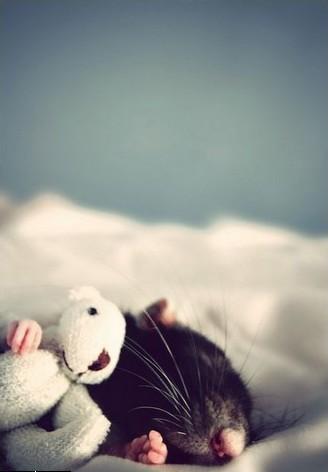 Фотосессия крысят отJessica Florence. Изображение № 5.