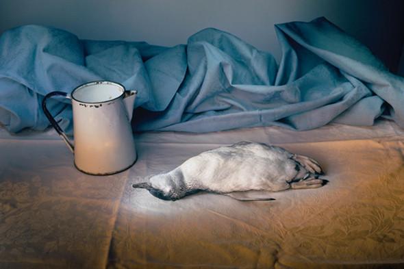 Фотография Marian Drew. «Манипулированный» still life, освещенный узким источником света. В других фотографиях из этой серии использована световая кисть. Изображение № 25.