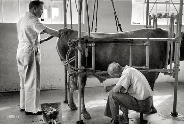 Фотографии с животными, начало прошлого века. Изображение № 5.