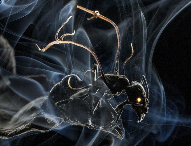 Заражённый грибком муравей / Автор: Anand Varma. Изображение № 9.