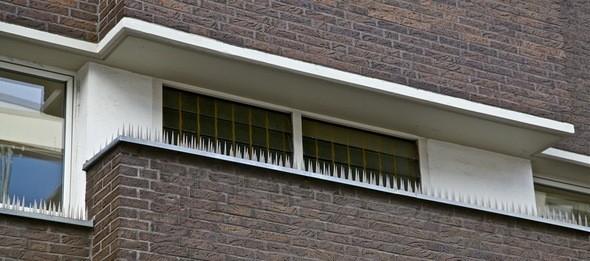 Колючки на подоконниках для того чтобы голуби не садились. Изображение № 4.