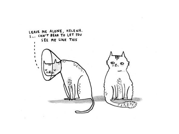 Gemma Correll и её коты. Изображение № 11.