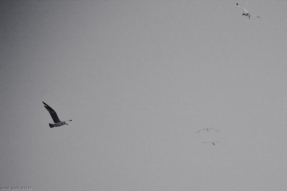 Пронзаясь махом крыльев - non stop. Изображение № 12.