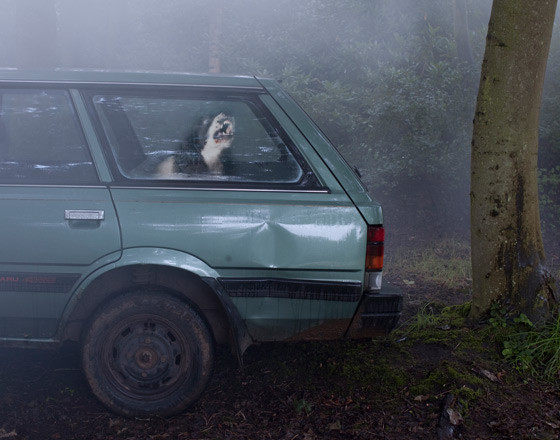 The silence of dogs in cars. Изображение № 11.