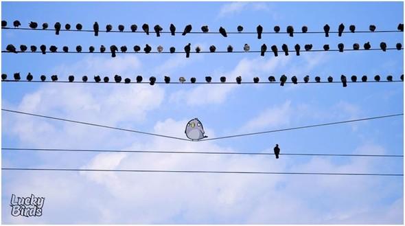 Какого цвета птица удачи?. Изображение № 3.