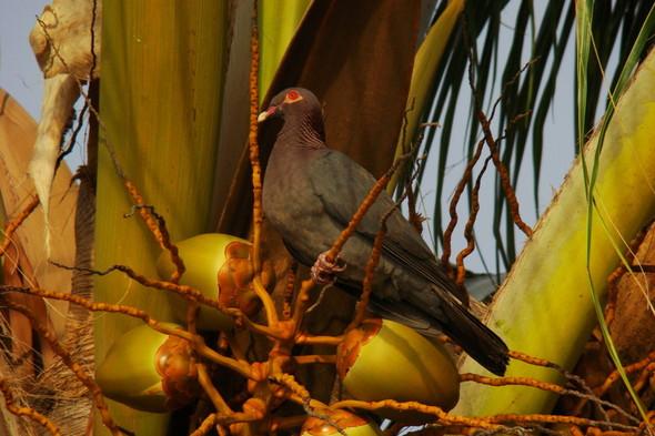 BarbadoS part 2. Изображение № 3.