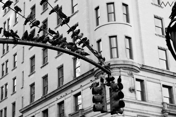 New-York. Изображение № 27.