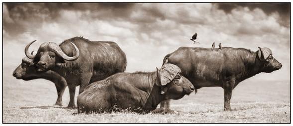 МояАфрика. Изображение № 1.