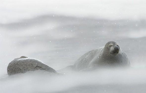 Фотоконкурс National Geographic 2010. Изображение № 38.