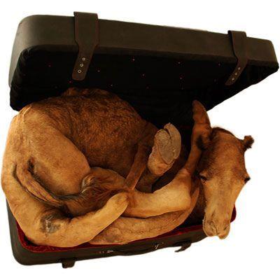 Мертвые животные всовременном искусстве. Изображение № 3.