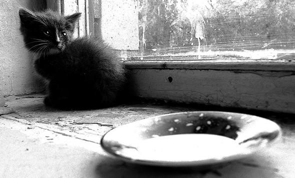 Блудливые коты. Изображение № 8.