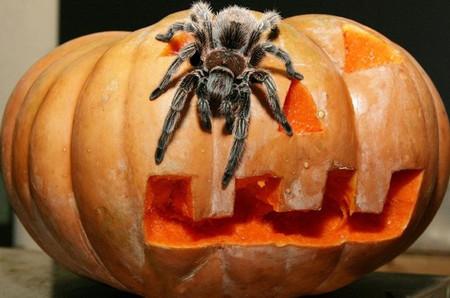 Хэллоуин итыквомания вГермании иАмерике. Изображение № 9.