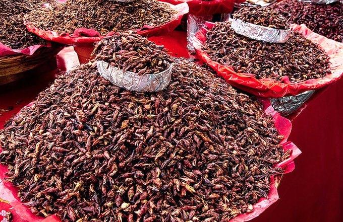 8 насекомых, которые заменят нам еду. Изображение № 2.