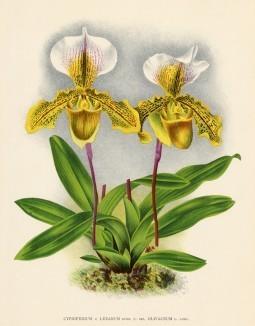 Глянцевые орхидеи: слухи, сплетни, комментарии. Изображение № 13.