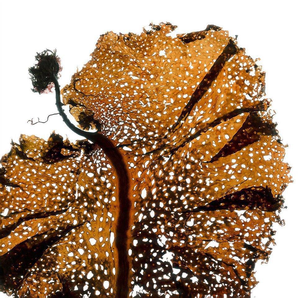 Морские водоросли, которые выглядят как инопланетные существа. Изображение № 7.