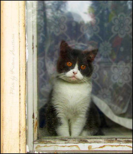 Cat. Window. Изображение № 42.