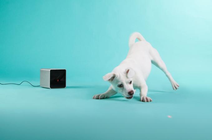 Украинские изобретатели гаджета для животных Petcube вышли на Kickstarter. Изображение № 2.