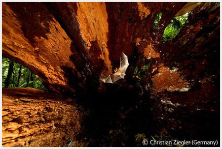 Победители Wildlife Photographer 2008. Изображение № 58.