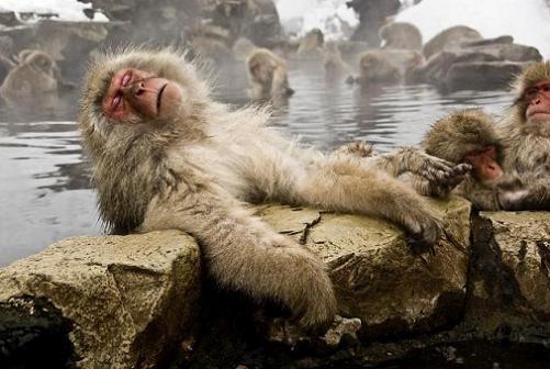 И даже обезьянам нужен отдых. Изображение № 9.