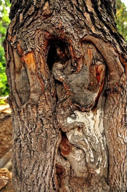 Treefilia. Изображение № 13.