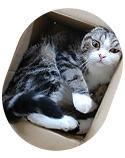 Некролог: Кот умер! Даздравствует кот!. Изображение № 5.