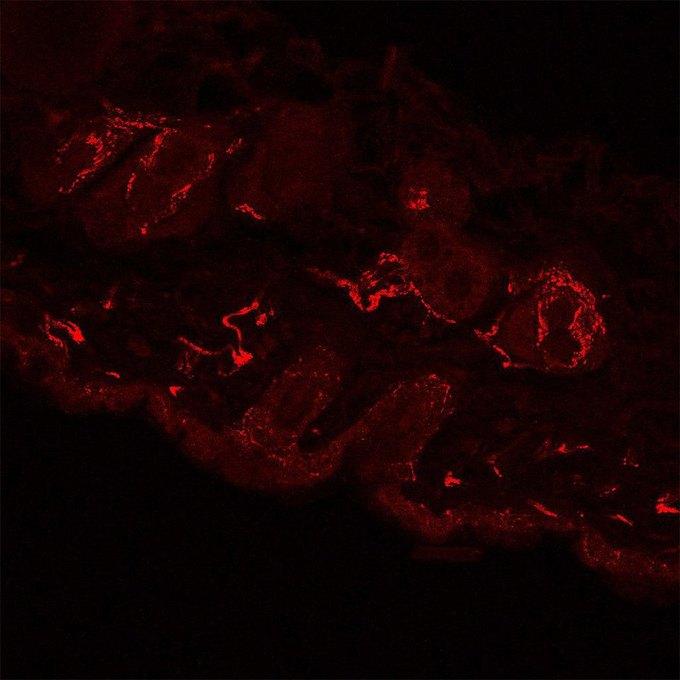 Фото дня: самое детализированное изображение нервов. Изображение № 4.