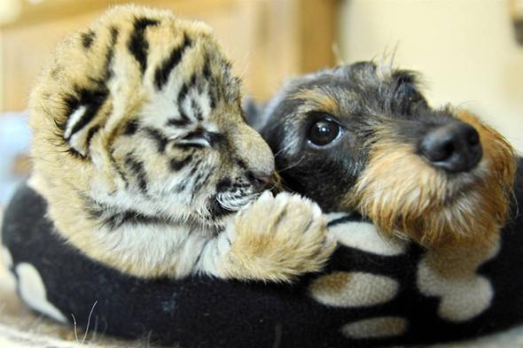 Дружба - она и у животных дружба!. Изображение № 16.