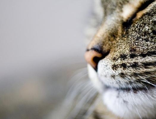Кошки- лучшие целители. Изображение № 1.