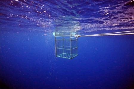 James Cooper – подводный сюрреализм. Изображение № 4.