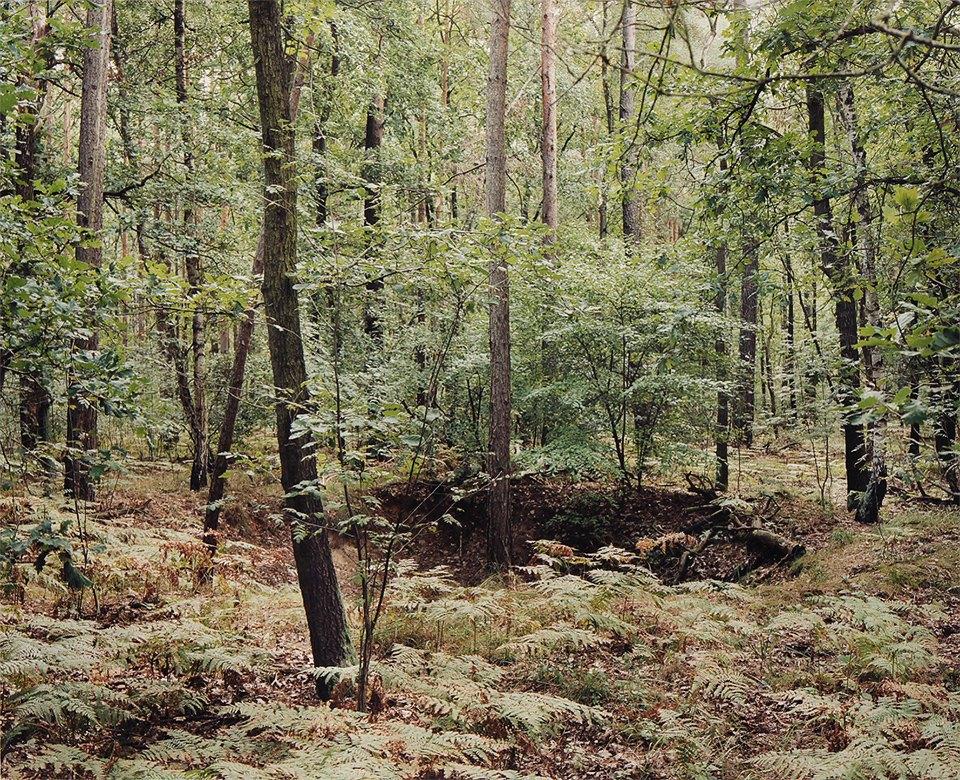 Галерея: как война изменила леса Германии. Изображение № 2.