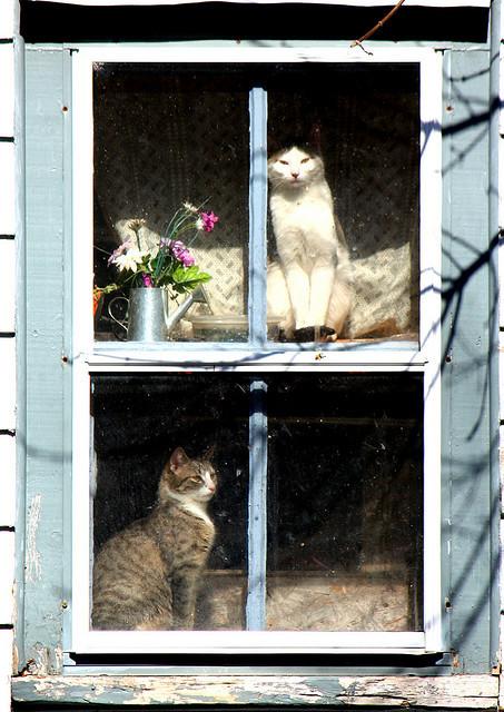 Cat. Window. Изображение № 43.