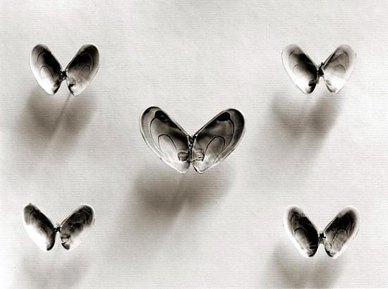 Черно-белые сюрреалистические фотографии Chema Madoz. Изображение № 9.