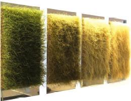 Дизайн-трава. Изображение № 11.