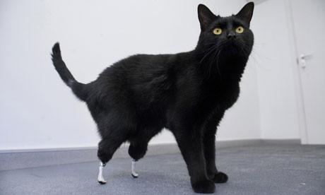 Удивительная история кота Оскара. Изображение № 1.