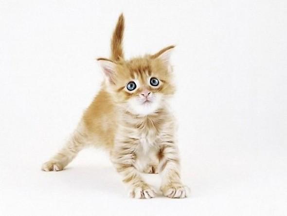 Кошки в интерьере. Изображение № 6.