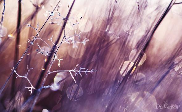 Фотограф Siebe Warmoeskerken. Изображение № 11.